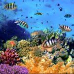 Barriera corallina: cos'è e dove si trova