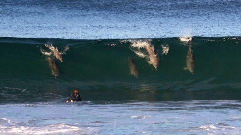 come fare surf regole per principianti